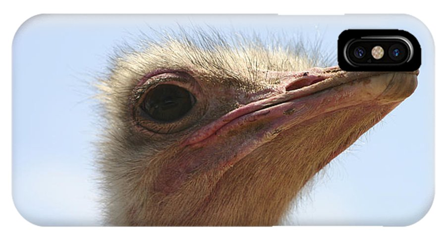 Ostrich IPhone X Case featuring the photograph Ostrich Head Close Up by Danny Yanai