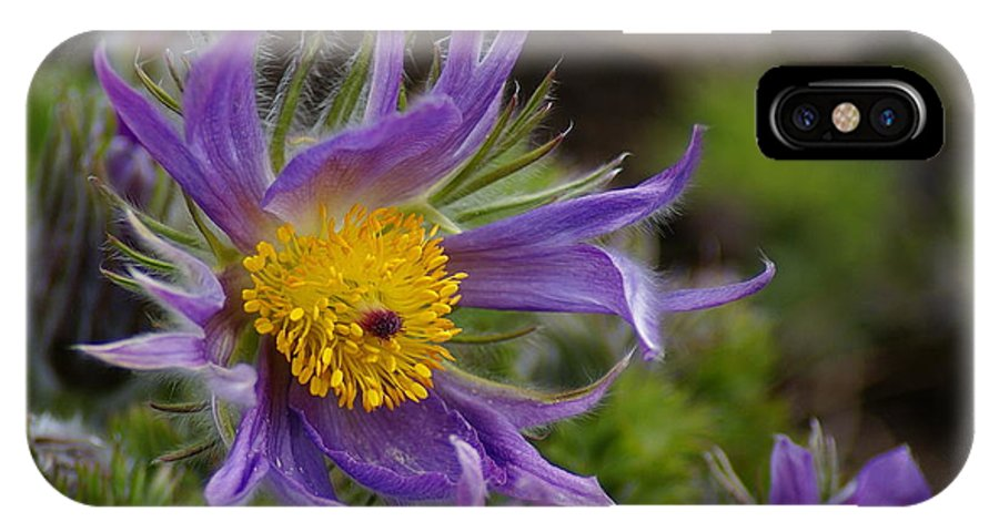 Flowers IPhone X Case featuring the photograph Otherworldly Flora by Ben Upham III