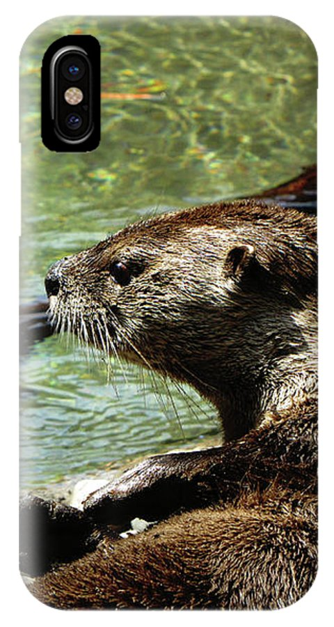 Otter IPhone X Case featuring the photograph Otter by September Stone
