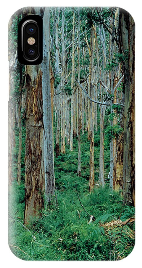 Woods IPhone X / XS Case featuring the photograph Out Bush by William Stone