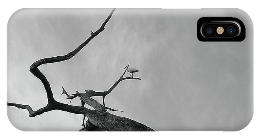 Birds IPhone X Case featuring the photograph Out On A Limb by Robert Meanor