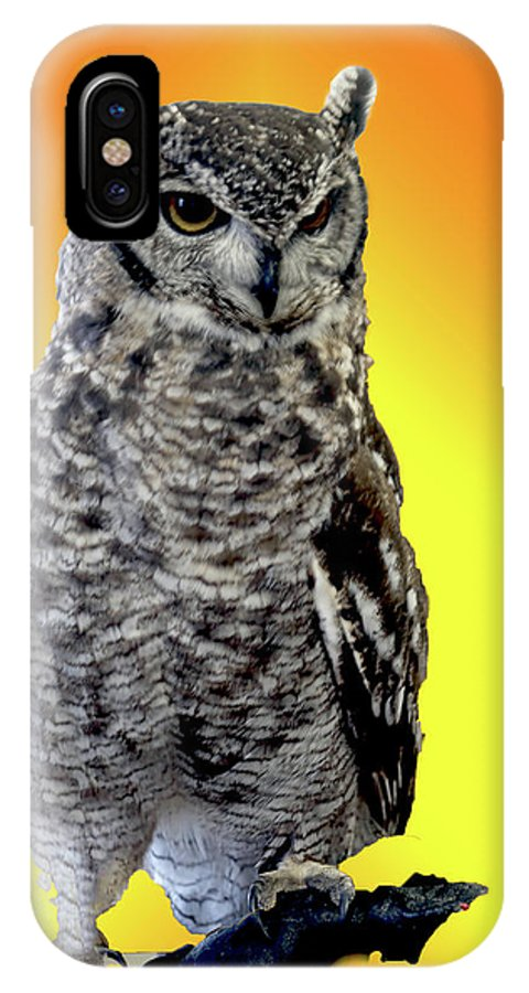 Places IPhone X Case featuring the photograph Owl On Branch by Michael Riley