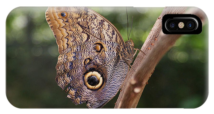 Butterfly IPhone X Case featuring the photograph Owls Don't Always Have Feathers by Shelley Jones