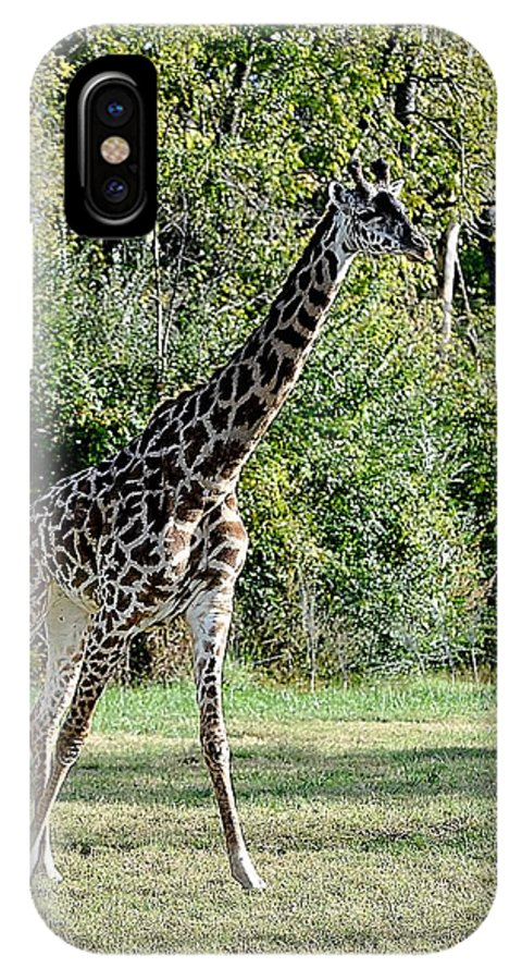 Animals IPhone X Case featuring the photograph Pacer by Jan Amiss Photography