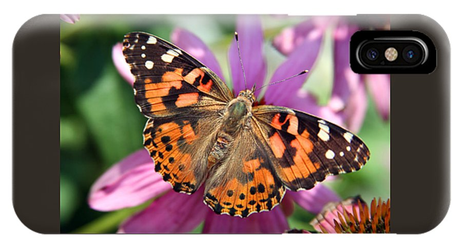 Painted Lady IPhone Case featuring the photograph Painted Lady Butterfly by Margie Wildblood