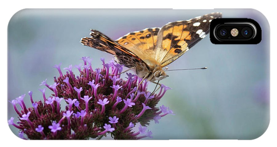 Butterfly IPhone X Case featuring the photograph Painted Lady by Claudia Kuhn