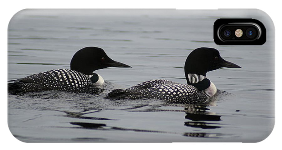 Loon IPhone X Case featuring the photograph Pair Of Loons by Steven Clipperton