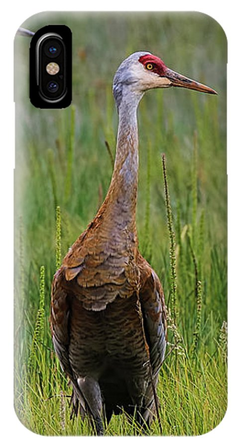 Cranes IPhone X Case featuring the photograph Pair Of Sandhill Cranes by Amber D Hathaway Photography