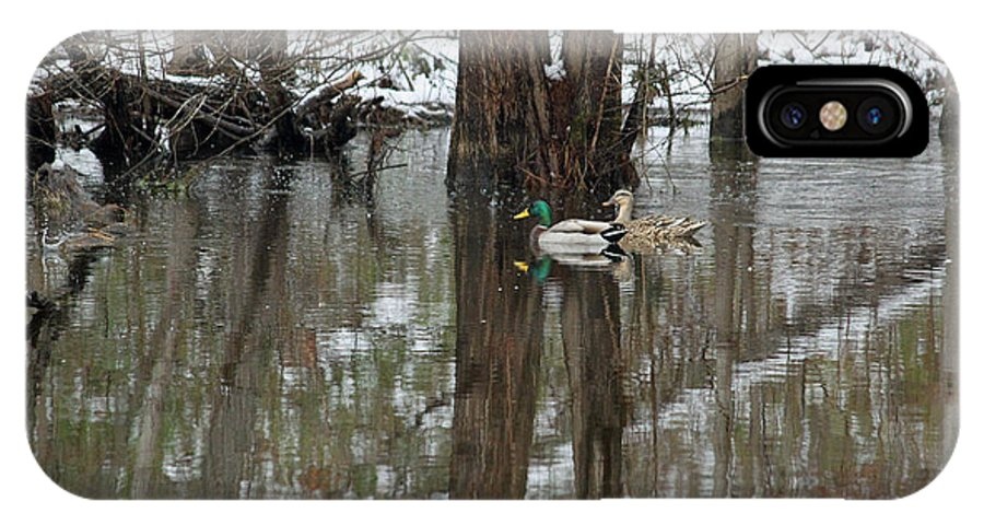 Duck IPhone X Case featuring the photograph Paired Up - Awaiting Spring by Suzanne Gaff
