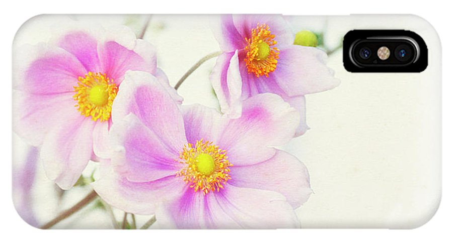 Pink IPhone X / XS Case featuring the photograph Pale Pink Anemone by Jim And Emily Bush