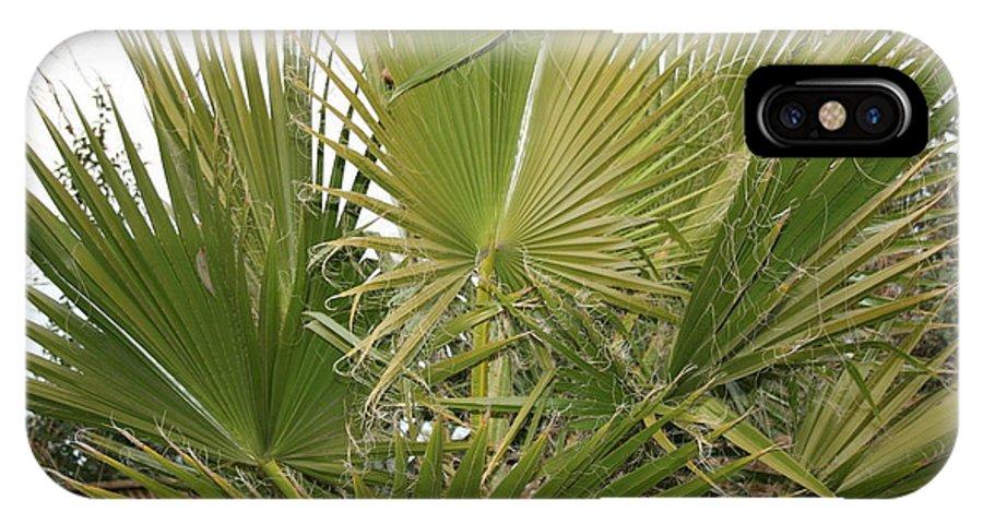 Bush IPhone X Case featuring the photograph Palm Bush by Joshua Sunday