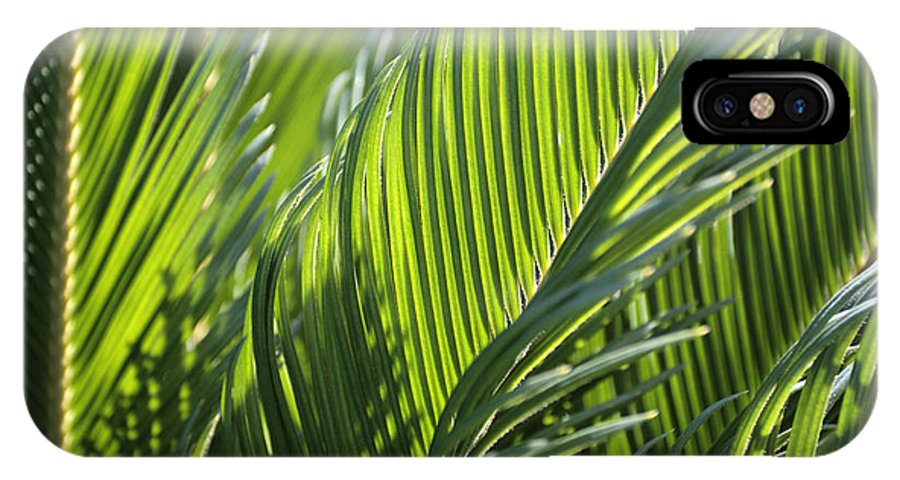 Palm IPhone X Case featuring the photograph Palm Leaf by Phil Crean