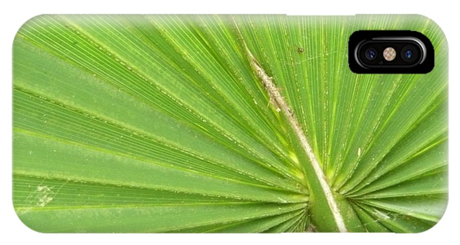 Palmetto IPhone X Case featuring the photograph Palmetto II by Kathy Schumann