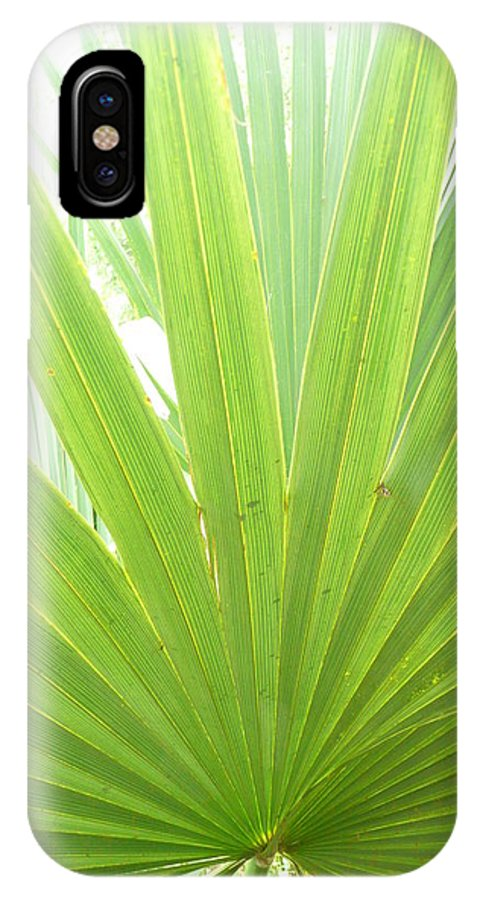 Green IPhone X Case featuring the photograph Palmetto by Kathy Schumann