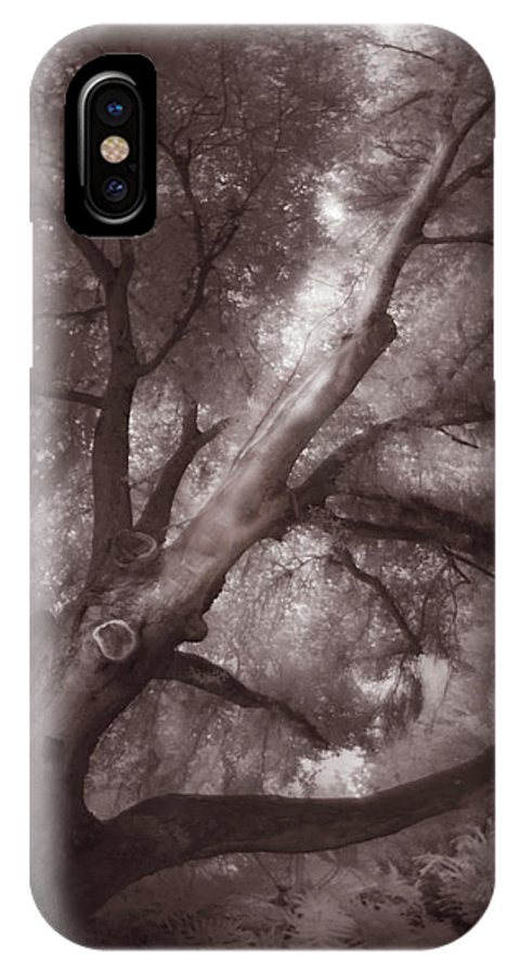 Nature IPhone X Case featuring the photograph Pams Tree Two B And W by Gary Bartoloni