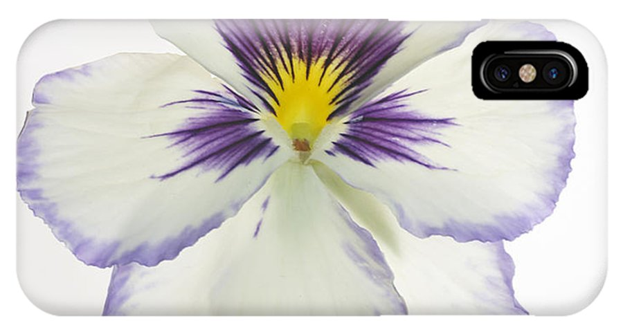 Pansy Genus Viola IPhone Case featuring the photograph Pansy 2 by Tony Cordoza