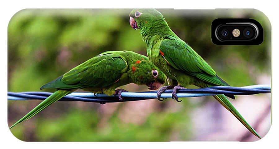 Bird IPhone X Case featuring the photograph Parakeet Couple by Fausto Capellari