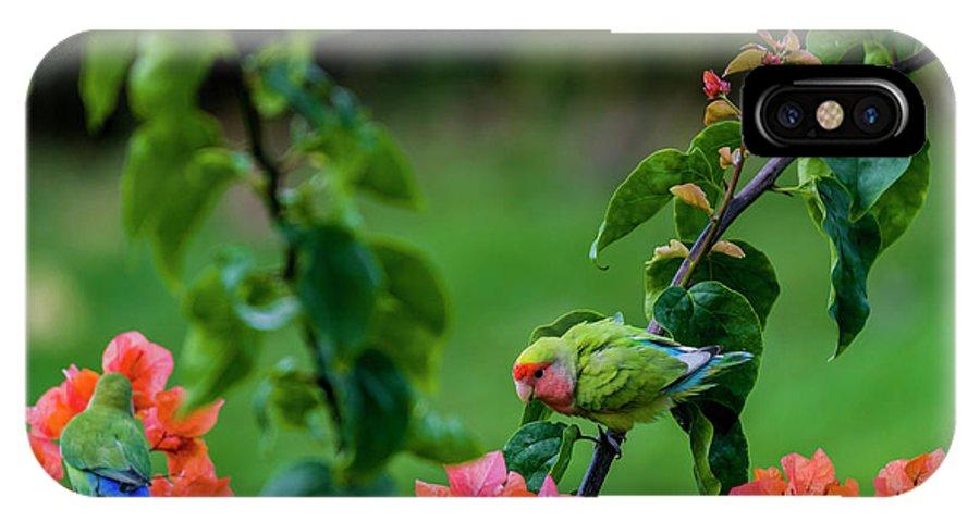 Birds IPhone X Case featuring the photograph Parakeet South Maui by Robert Morris