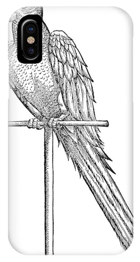 1555 IPhone X Case featuring the photograph Parrot by Granger