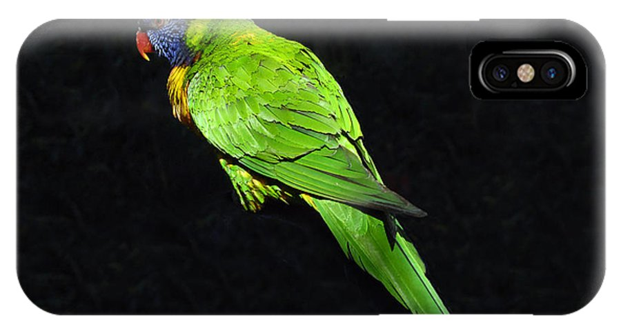 Parrot IPhone X Case featuring the photograph Parrot In Black by David Lee Thompson