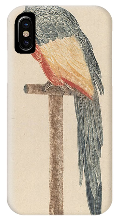 IPhone X Case featuring the drawing Parrot by Workshop Of Johann Teyler
