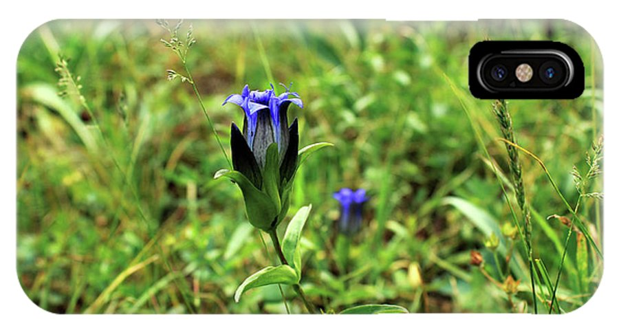 Parry's Mountain Gentian. Flowers IPhone X Case featuring the photograph Parry's Mountain Gentian by James Pell