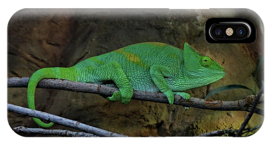 Chameleon IPhone X Case featuring the photograph Parson's Chameleon by Doc Braham