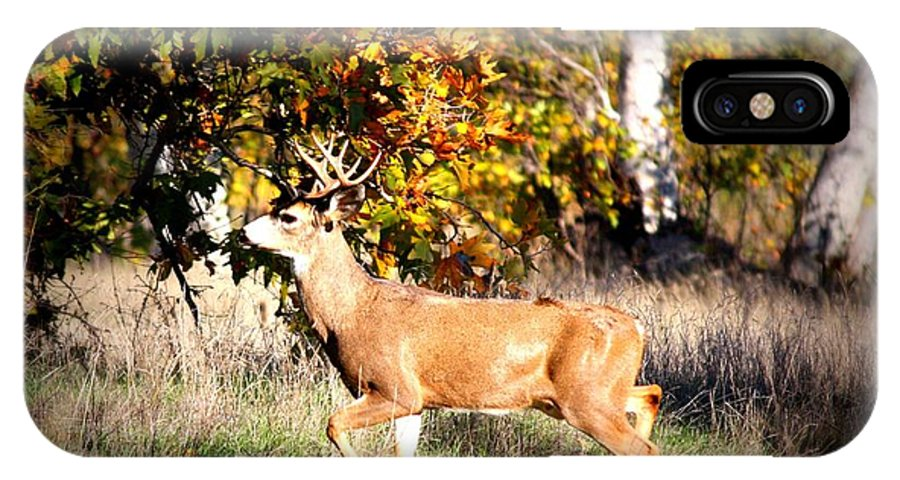 Animal IPhone X Case featuring the photograph Passing Buck In Autumn Field by Carol Groenen