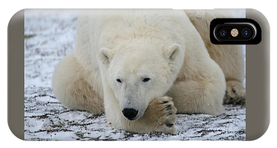 Polar Bear IPhone X / XS Case featuring the photograph Polar Bear Patience by Connie Jeffcoat