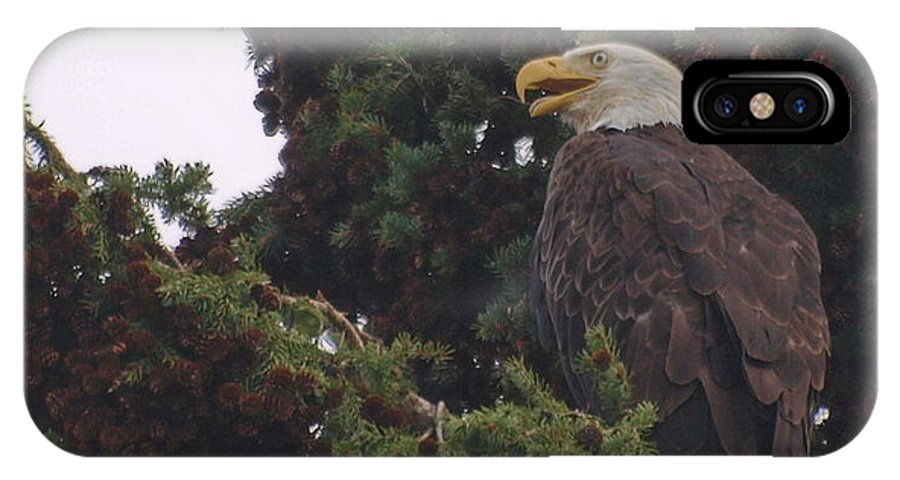 Eagle IPhone X / XS Case featuring the photograph Patience by Vivian Martin