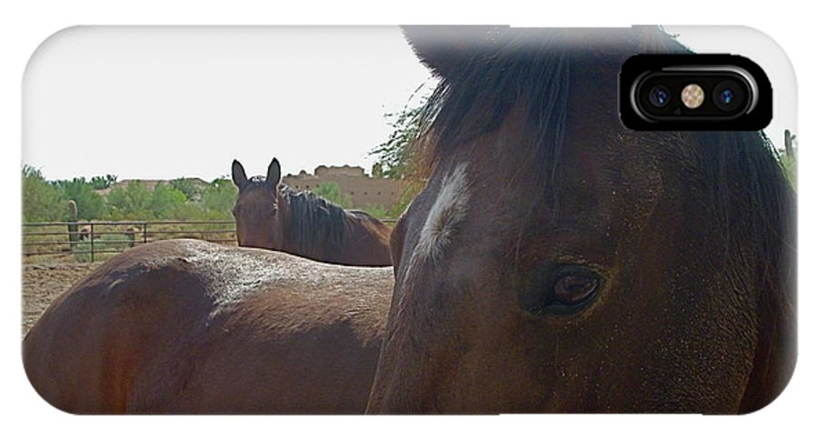 Horse IPhone X Case featuring the photograph Paying Attention by Amy Strong