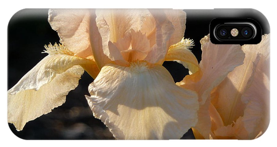 Flower. Iris IPhone Case featuring the photograph Peach Bearded Iris by Ruth Kamenev