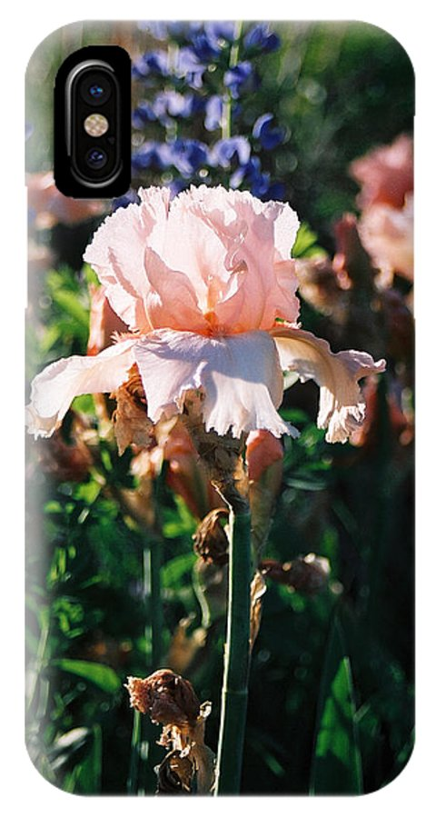 Flower IPhone X Case featuring the photograph Peach iris by Steve Karol