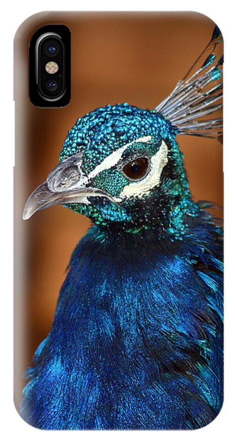 Peacock IPhone X Case featuring the photograph Peacock by Anthony Jones