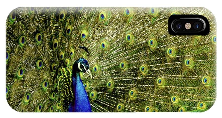 Usa IPhone X Case featuring the photograph Peacock At Frankenmuth Michigan by LeeAnn McLaneGoetz McLaneGoetzStudioLLCcom