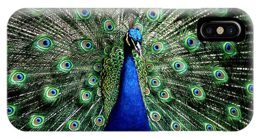 Peacock IPhone X / XS Case featuring the photograph Peacock by Dragica Micki Fortuna