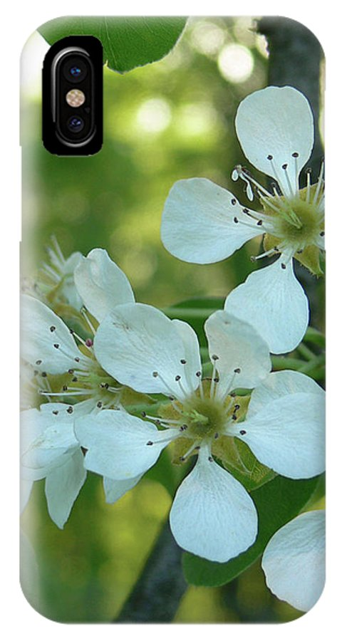 Pear Blossoms IPhone X Case featuring the photograph Pear Blossoms by Natalie LaRocque