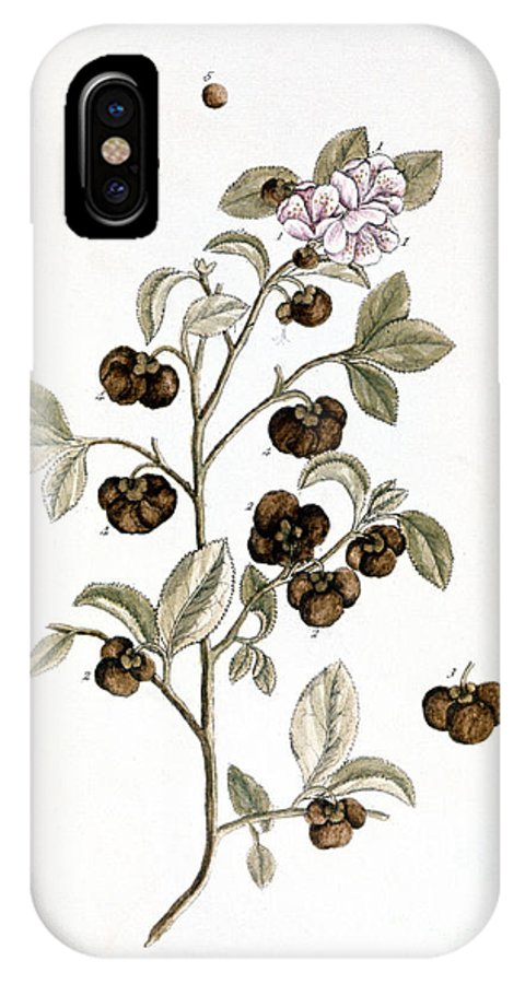 1730s IPhone X Case featuring the photograph Peco Tea, 1735 by Granger
