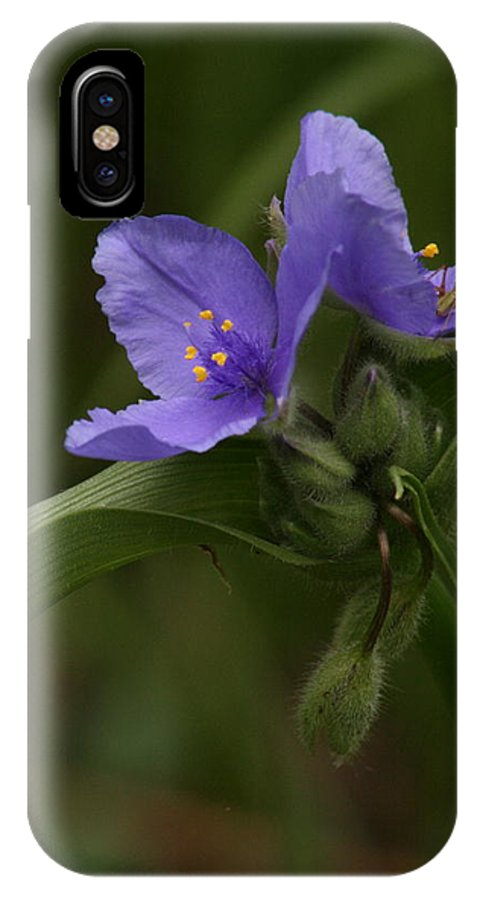 Violet IPhone X Case featuring the photograph Peek A Boo by David Dunham