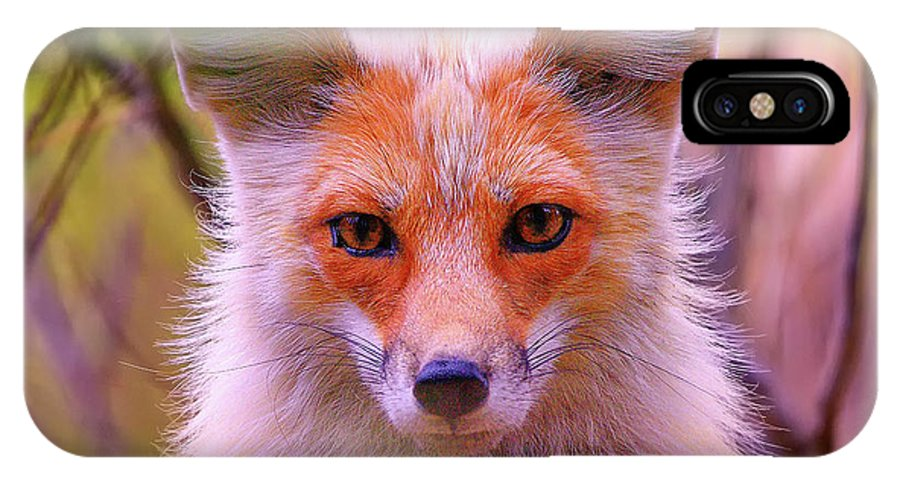 Fox IPhone X Case featuring the photograph Peek-a-boo by Greg Norrell