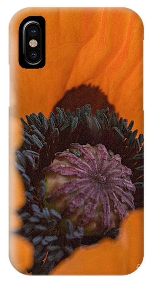 Orange IPhone X Case featuring the digital art Peek A Boo by Jacqueline Milner