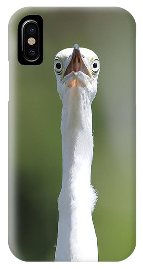 Cow Ibis IPhone X Case featuring the photograph Peek-a-boo by Keith Lovejoy