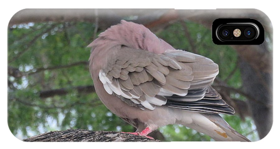 Dove IPhone X / XS Case featuring the photograph Peekaboo by Scott Yount