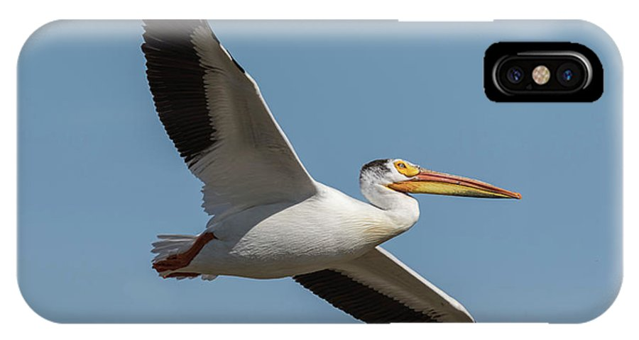 American White Pelican IPhone X Case featuring the photograph Pelican 2017-1 by Thomas Young