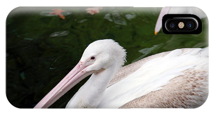 Pelican IPhone Case featuring the photograph Pelican by Amanda Barcon
