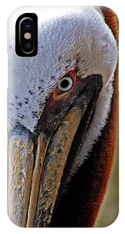 Pelican IPhone X Case featuring the painting Pelican Head by Michael Thomas