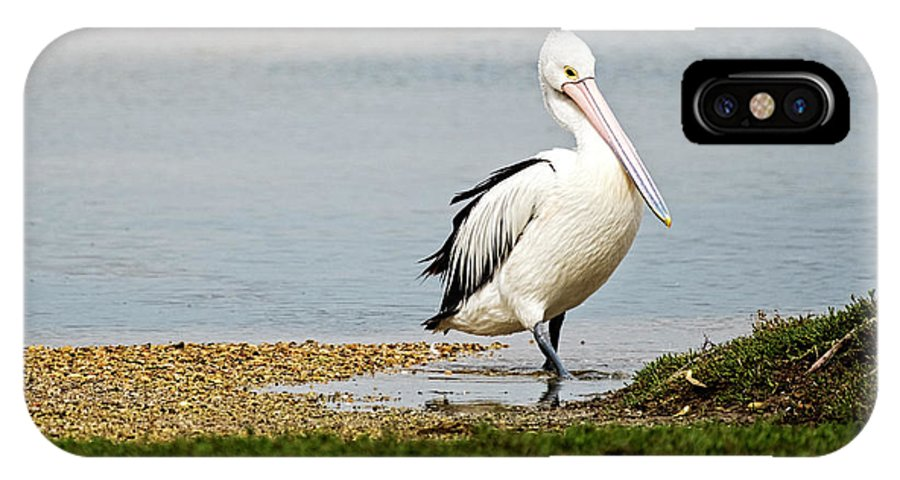 Pelican IPhone X Case featuring the photograph Pelican Pose by Catherine Reading