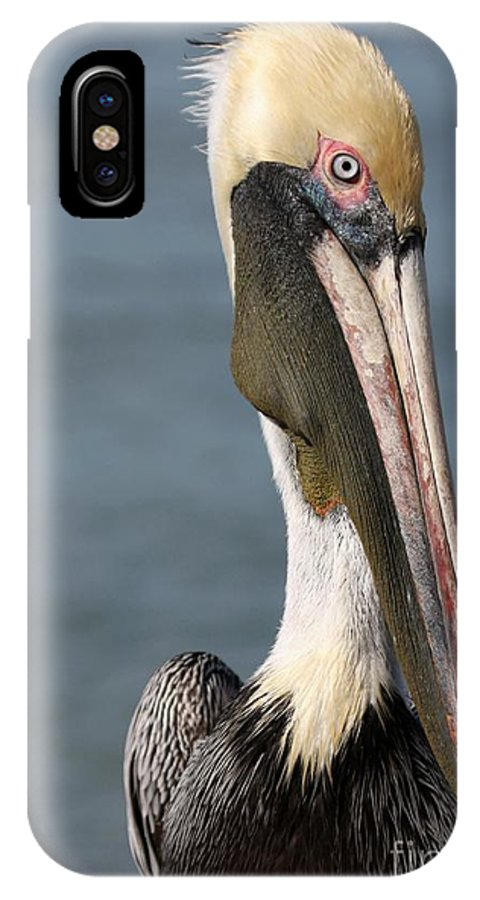 Bird IPhone X Case featuring the photograph Pelican by Sabrina L Ryan