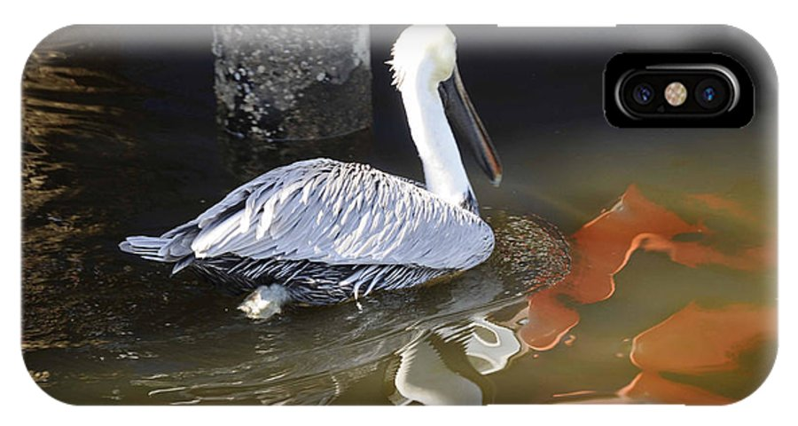 Pelican IPhone X Case featuring the photograph Pelican Swim by Jody Lovejoy