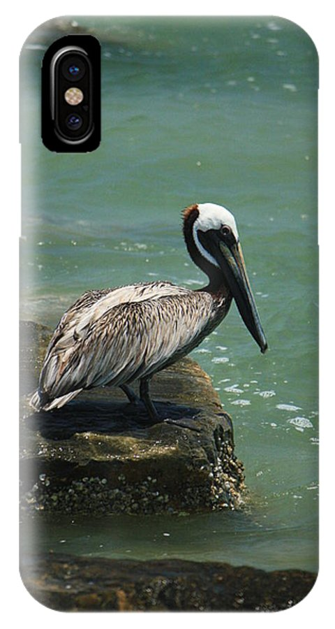 Pelican IPhone X Case featuring the photograph Pelican's Perch by Mandy Shupp